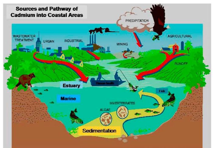 marine oil spills and their effects on marine ecology pdf