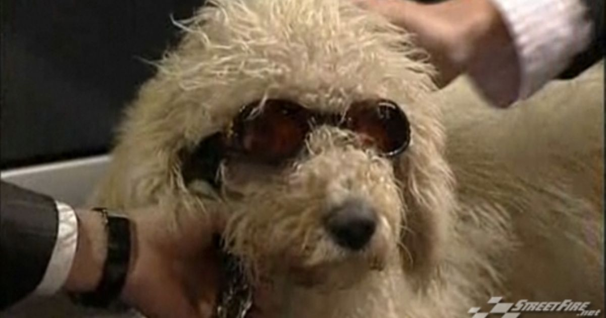 What Ever Happened To Top Gear Dog
